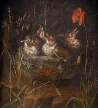 Fészekben ülő madarak
